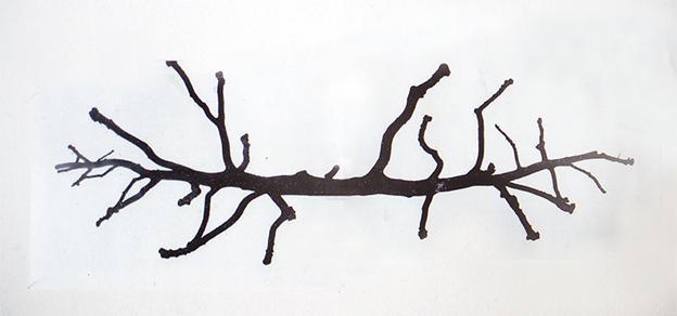 boom bomen bos